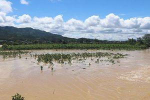 Lâm Đồng: Báo cáo thiệt hại sau lũ quét tại thành phố Bảo Lộc