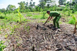 Đẩy mạnh truy quét, bảo vệ rừng