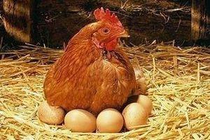Clip nông dân 'trộm' trứng gà gây bão mạng xã hội Trung Quốc