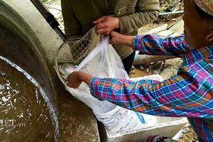 Lạng Sơn: 8x người Dao làm giàu nhờ nuôi loài cá 'quý tộc' ưa nước lạnh