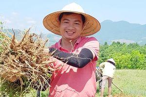 Chàng phóng viên Hà Thành bén duyên cùng sản vật tiến vua ở Quảng Bình