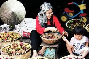 Đổi thay trên vùng đất trái cây nổi tiếng