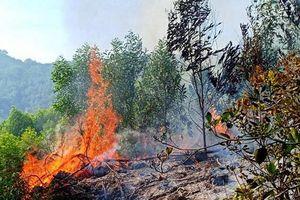 Nghệ An: Người dân trắng đêm dập lửa cháy cứu rừng thông