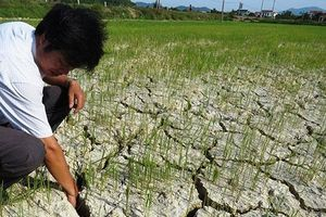 Quảng Bình quay quắt khô hạn