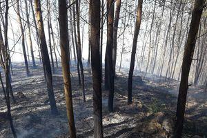 Cháy gần 15 ha rừng do sơ suất đốt rẫy