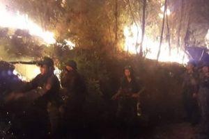 Nghệ An: Cháy rừng thông 15 năm tuổi