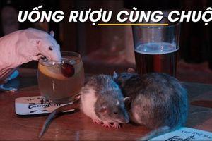 Độc đáo đến quán bar chơi với... chuột tại San Francisco