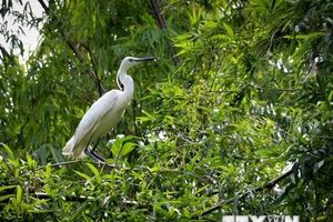 Ngăn chặn suy giảm và suy thoái đa dạng sinh học ở Việt Nam