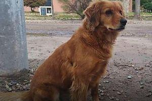 Chủ bị bắt, chó trung thành kiên nhẫn đợi ròng rã một năm bên ngoài đồn cảnh sát