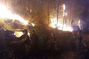 Gần nghìn người trắng đêm dập lửa, cứu rừng thông ở Nghệ An