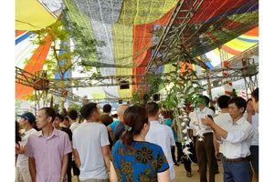 Rực rỡ những giò phong lan tiền tỷ tại Ngày hội hoa lan Đông La