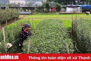 Phường Đông Cương chuyển đổi cơ cấu cây trồng đạt hiệu quả kinh tế cao