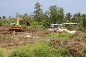 Có trên 462 tấn heo buộc phải tiêu hủy do dịch tả heo Châu Phi