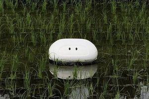 Nhật Bản: Kỹ sư ô tô sáng chế 'robot vịt' làm việc trên ruộng lúa