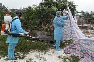 Hà Nội cấp bổ sung hơn 200 tấn hóa chất để phòng, chống bệnh dịch tả lợn châu Phi