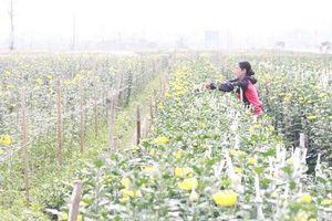 Hà Nội có 84,2% tổng số xã về đích nông thôn mới