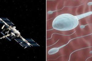 Phát hiện bất ngờ: Tinh trùng 'sống khỏe' ở ngoài vũ trụ