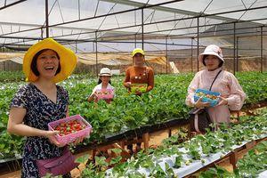 Đà Lạt khuyến khích du lịch canh nông