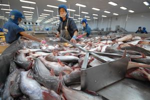 Vướng thông quan hàng cá tra vào Trung Quốc do ghi sai tên