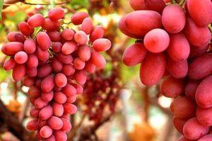 Những thực phẩm bổ máu, cực kỳ tốt cho thận