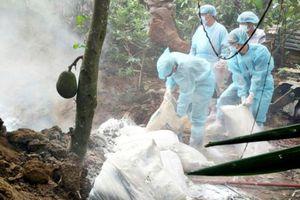 Gần nửa triệu con heo của tỉnh Bà Rịa - Vũng Tàu nguy cơ bị lây nhiễm dịch ASF