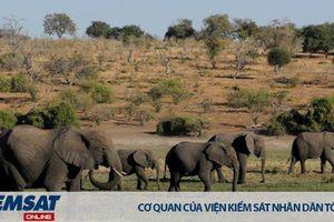 Giảm nghèo và giảm tham nhũng - giải pháp cho nạn săn trộm voi ở Châu Phi