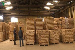Hoa Kỳ là thị trường xuất khẩu số 1 của ngành chế biến gỗ