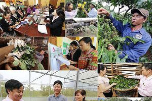 Hơn 94.000 hộ được tiếp nguồn lực vươn lên thoát nghèo