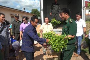Tặng cây giống cho bản Densavan, Lào