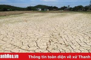Tĩnh Gia: Trên 60% diện tích lúa của xã Phú Sơn có nguy cơ bị chết do thiếu nước