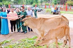 Binh đoàn 15 tặng bò sinh sản cho các hộ nghèo ở tỉnh Gia Lai