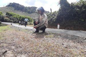 Phát quang cây cỏ 2 bên quốc lộ bằng… thuốc diệt cỏ