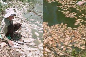 Tiếp vụ nông dân nguy cơ phá sản do công an xã ra quyết định 'lộng quyền': Nhiều tấn cá chết được báo cáo sai lệch thành… 20kg