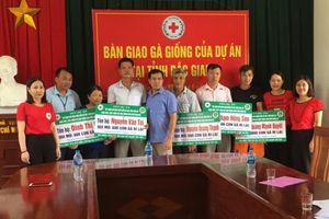 Cấp 6.000 gà giống cho các hộ chăn nuôi tại Bắc Giang