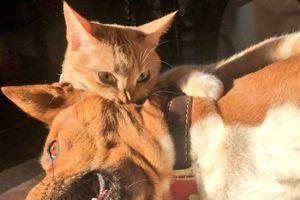 Những bức ảnh chứng minh mèo là sinh vật đáng yêu nhất hành tinh