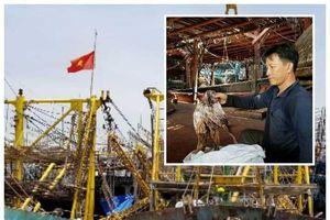 Trung Quốc thay đổi phương thức nhập khẩu, 930 tấn mực khô của ngư dân Quảng Nam không biết đi về đâu