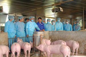 Dịch tả lợn châu Phi: Nhà nước hỗ trợ 25.000 đồng/kg lợn hơi