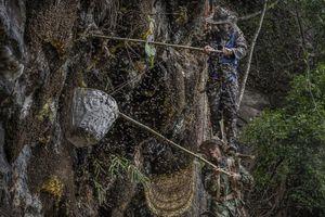 Nghề không dành cho những người yếu tim: Lấy mật ong rừng ở Trung Quốc
