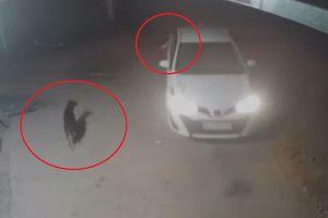 Cẩu tặc đi ôtô, nhanh tay trộm chó ngay trước nhà