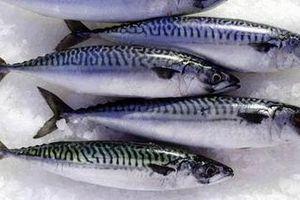 Đặt hàng nghiên cứu về kiểm soát chất lượng một số loại hải sản