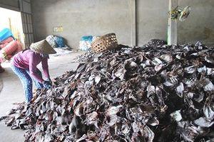 Gần 1000 tấn mực khô ứ đọng vì Trung Quốc ngừng thu mua