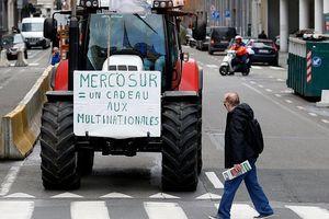 Nông dân châu Âu phản đối thỏa thuận thương mại EU-MERCOSUR
