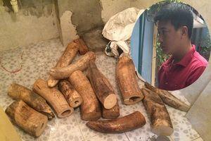 Bắt quả tang đối tượng vận chuyển 207 kg ngà voi