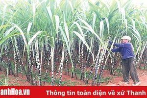 Huyện Thạch Thành duy trì và nâng cao chất lượng tiêu chí ở các xã đạt chuẩn nông thôn mới
