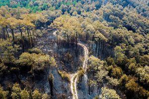 Cảnh hoang tàn ở rừng phòng hộ bị lửa thiêu 3 ngày nhìn từ trên cao