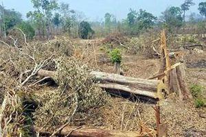 Kỷ luật 6 cán bộ liên quan đến rừng bị tàn phá