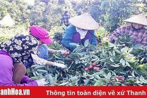 Phát triển các cây trồng lợi thế