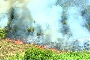 Hàng trăm người lao vào lửa không chế đám cháy rừng ở Quảng Bình