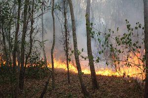 Quảng Nam, Quảng Ngãi: Liên tiếp xảy ra cháy rừng