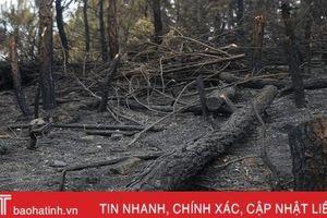 Rừng ở Nghi Xuân hoang tàn sau 3 ngày chìm trong lửa
